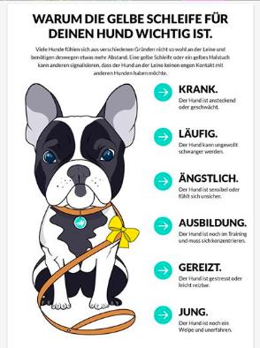 gelbe schleife hund