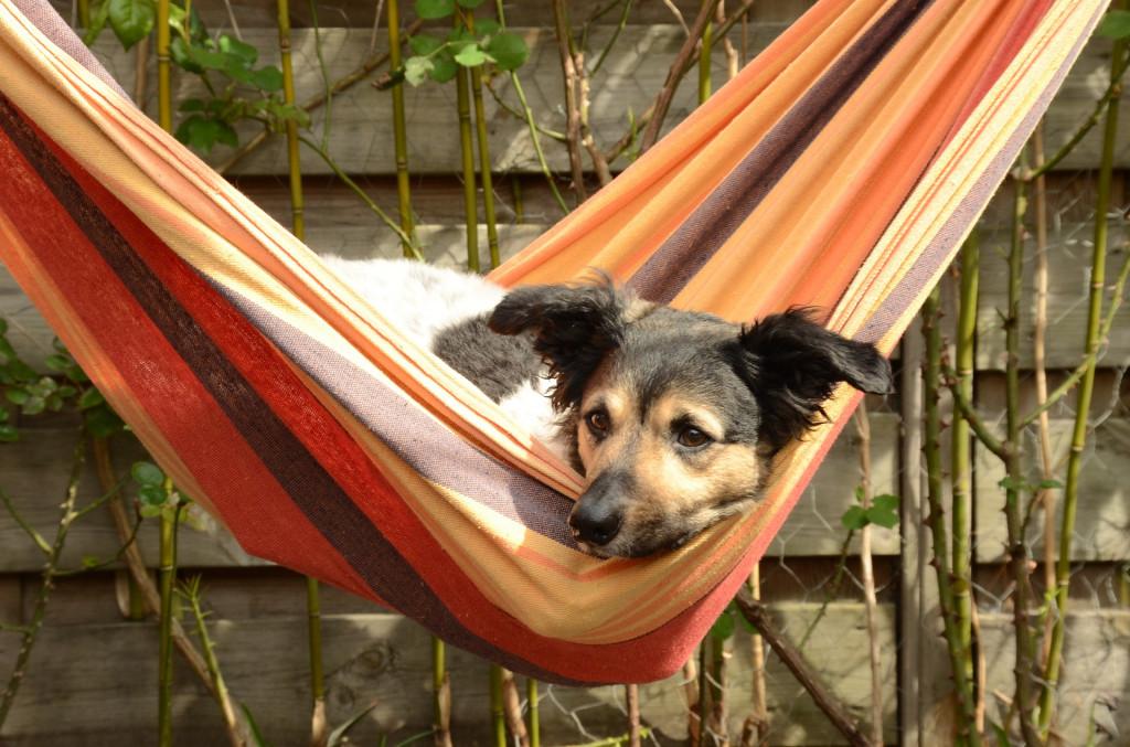 hundebett empfehlenswert