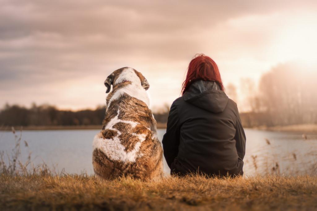 hund als haustier