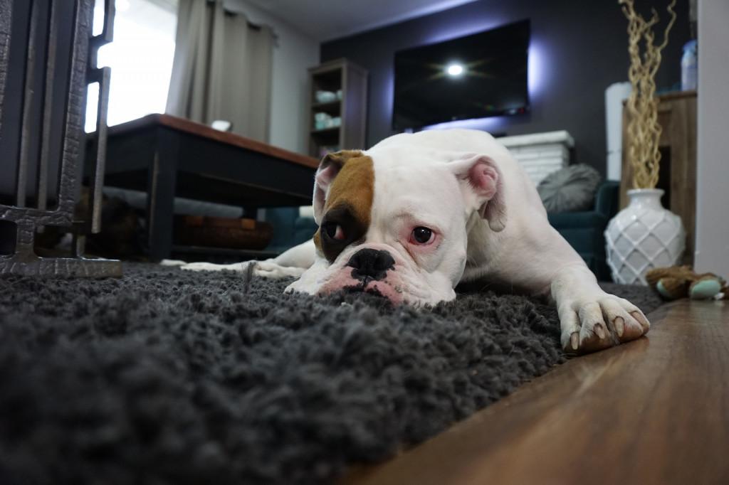 hunde schnüffelteppich
