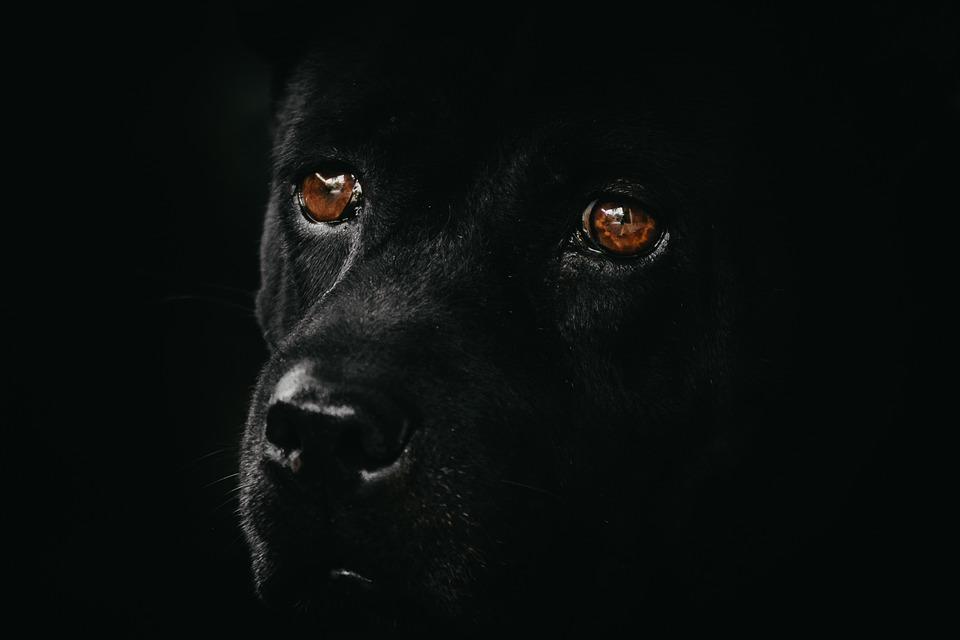 leuchthalsband hund aufladbar