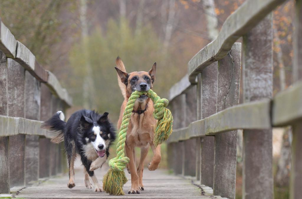 robustes spielzeug für den hund