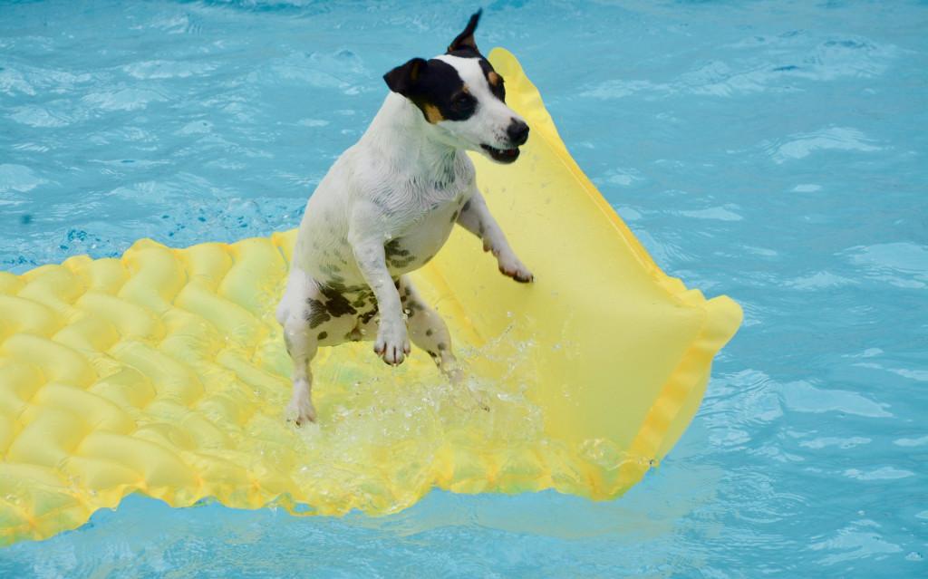 planschbecken hund