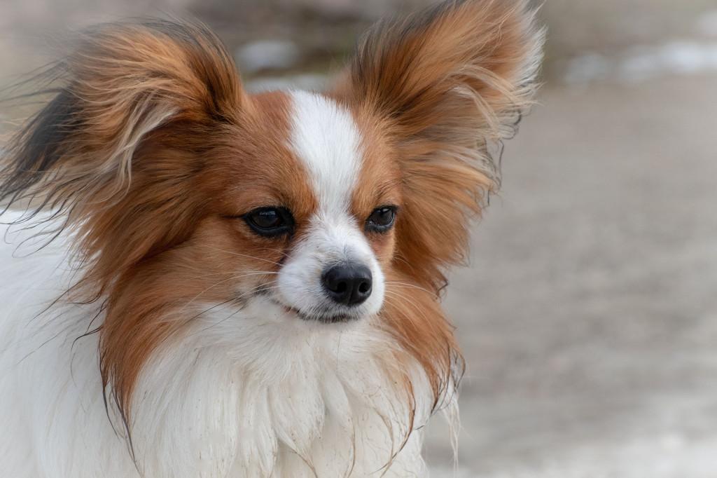 nervöser Hund